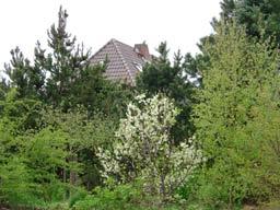 Baumblüte im Garten