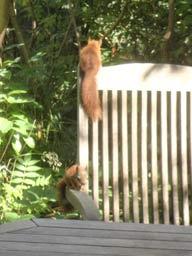 Kleine Eichhörnchen